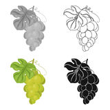 Bunch of yellow grapes icon in cartoon style isolated on white background. Wine production symbol stock vector. Bunch of yellow grapes icon in cartoon design Stock Photography