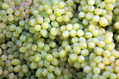 Bunch of Yellow Grapes Royalty Free Stock Photos