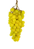 A bunch of yellow grapes Royalty Free Stock Images