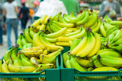 Bunch of yellow and green bananas in supermarket Royalty Free Stock Images