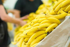 Bunch of yellow and green bananas in supermarket Stock Image