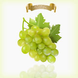 Bunch of yellow or green grapes with vine leaves isolated on white background. Cluster of grape. Realistic, fresh Royalty Free Stock Photography