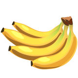Bunch of yellow juicy ripe bananas, vector fruit Stock Photos