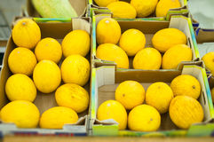 Bunch of yellow melons in boxes Royalty Free Stock Image