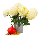 Bunch of yellow mums in watering can Stock Photo
