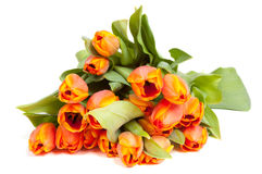 Bunch of yellow orange tulips Stock Images