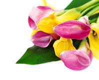 Bunch of yellow and pink cala lilies Stock Images
