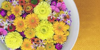 Bunch of yellow, pink and purple flowers stock photography