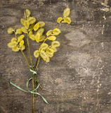 Bunch of yellow pussy willow with green bow Stock Image