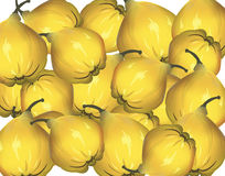 Bunch of yellow quinces Stock Photos