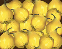 Bunch of yellow quinces Royalty Free Stock Photo