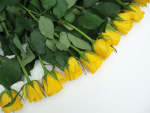 Bunch of yellow roses. On white background Stock Image