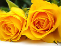 Bunch of yellow roses. On white background Stock Photos