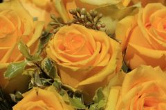 Bunch of yellow roses. Bouquet of wonderful yellow roses Stock Photo