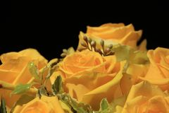 Bunch of yellow Roses Royalty Free Stock Photography