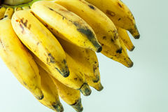Bunch of yellow small banana fruit. Of kerala india Royalty Free Stock Photos
