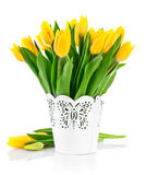 Bunch yellow spring tulips in bucket Royalty Free Stock Photos
