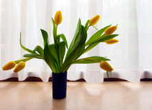 Bunch of yellow tulip flowers in vase on window sill,with curtai Royalty Free Stock Photography