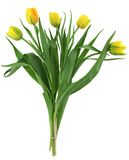 Bunch of yellow tulips Royalty Free Stock Photos
