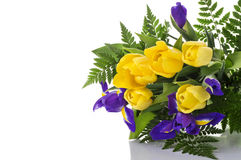 Bunch of yellow tulips and blue irises on white background Stock Image