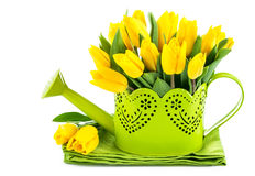 Bunch yellow tulips in watering can Stock Image