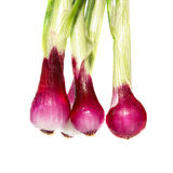 Bunch of young onions Stock Photography