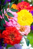 Bunch of zinnias Stock Photography