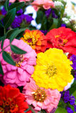 Bunch of zinnias Stock Image