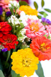 Bunch of zinnias Royalty Free Stock Photos