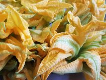 Bunch of zucchini flowers, healthy food, background and texture. Healthy food, ingredient for salads and vegetarian food, agriculture and harvest, organic food royalty free stock photos