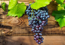 Bunche of blue grapes Royalty Free Stock Image
