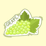 Bunche of grape badge vector illustration. Bunche of grape logo grow viticulture vector illustration. Green nature food isolated juicy berry badge. Winery Royalty Free Stock Photos