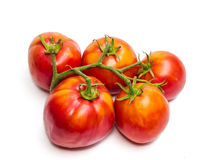 Bunche of tomatoes Royalty Free Stock Photos