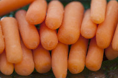 Bunched Baby Carrots Stock Images