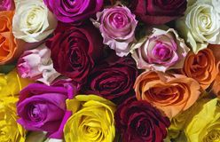 Bunched ha colorato le rose immagine stock