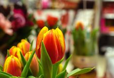 A bunched of red-yellow tulips. With blurred background, a present gift in Mother`s day royalty free stock photography