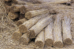 Bunched reeds Royalty Free Stock Photo