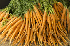 Bunches of baby carrots Stock Image