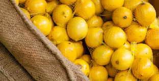 Bunches of Bagged Lemons in a Burlap Display Stock Photography