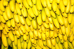 Bunches of Bananas Royalty Free Stock Photo