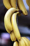 Bunches of bananas Royalty Free Stock Photography