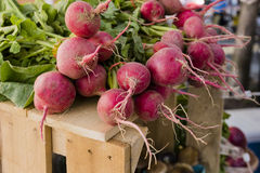 Bunches of Beets. Multiple bunches of beets set on a wooden crate Royalty Free Stock Photo