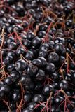 Bunches of black chokeberry Aronia as background stock photo