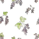 Bunches of black currant. Watercolor seamless background. Stock Photo