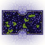 Bunches of the black grapes with dew drops. Vector banner with fresh grapes Stock Photo
