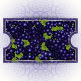 Bunches of the black grapes with dew drops. Vector banner with fresh grapes Royalty Free Stock Image