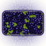 Bunches of the black grapes with dew drops. Vector banner with fresh grapes Stock Photography