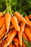 Bunches of carrots Stock Photo