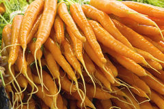 Bunches of Carrots Closeup Stock Images