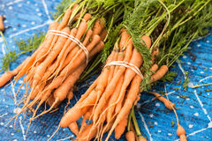 Bunches of Carrots at Farmers Market Royalty Free Stock Images